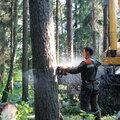 Валка, обрезка, спил и удаление деревьев в городе Видное, Ленинского района, Проведение высотных работ в Развилке