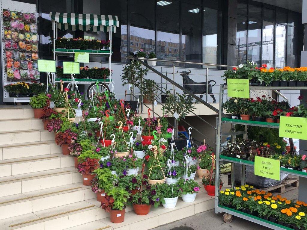 Лето Магазин Краснодар Растения