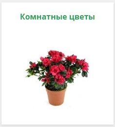 магазин семян — Интернет-магазин Семена Алтая — Красноярский край, фото №2