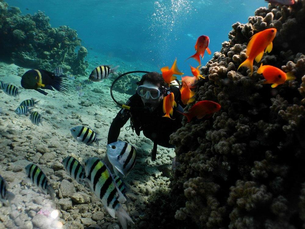 сайте красное море фото под водой светлое