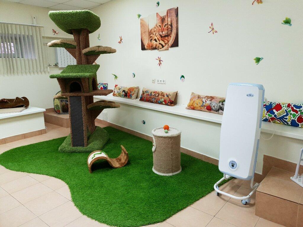 самого дизайн комнаты для кошек фото тум