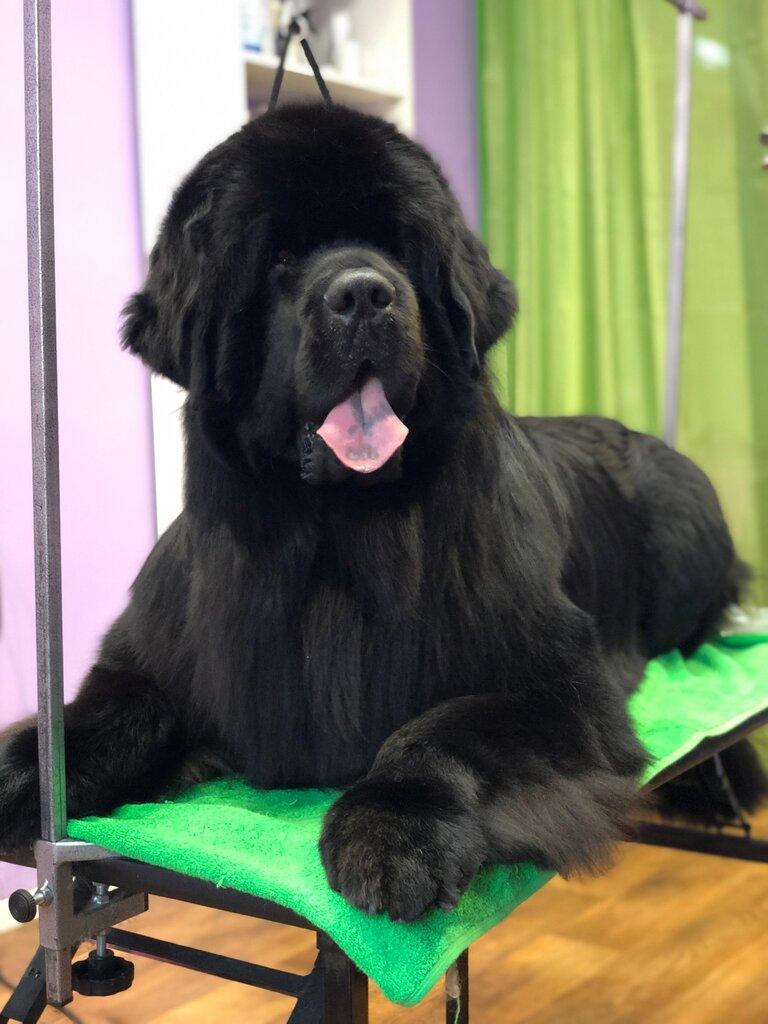 зоосалон, зоопарикмахерская — Purple Dog — Хабаровск, фото №4