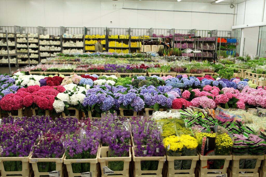 Интернет магазин 7 цветов