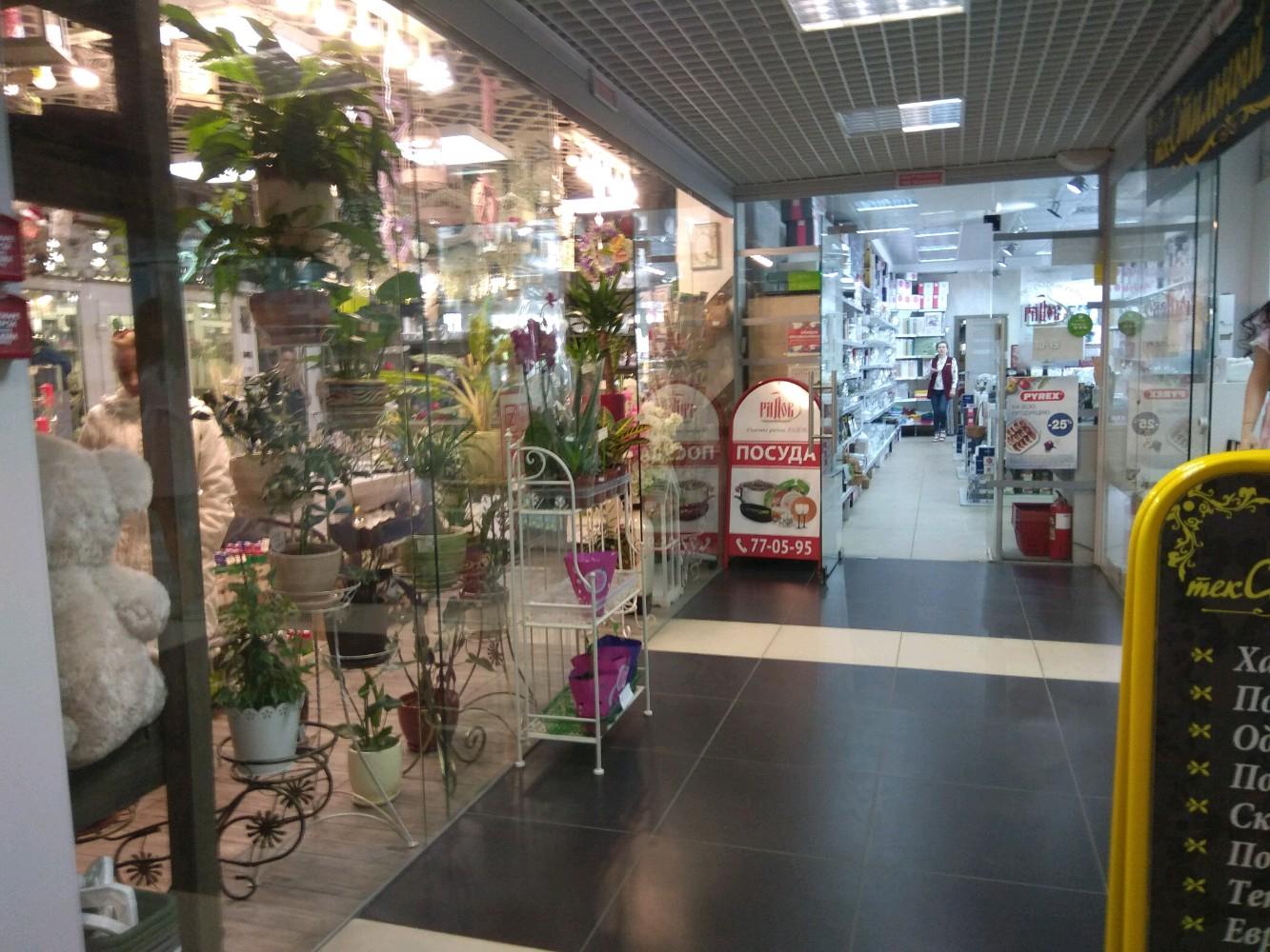 Магазины цветы в калининград доставка на дом, цветок горшке днепр