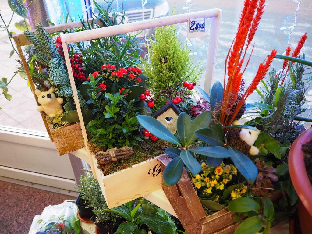 Составить осенний, магазин цветов коломна