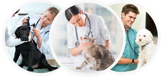 ветеринарная клиника — Ветеринарная клиника Зоомедик — Москва, фото №7