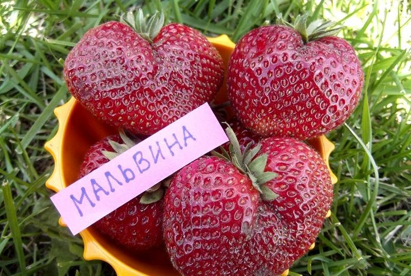 сельскохозяйственное предприятие — Велабрум — Краснодарский край, фото №2