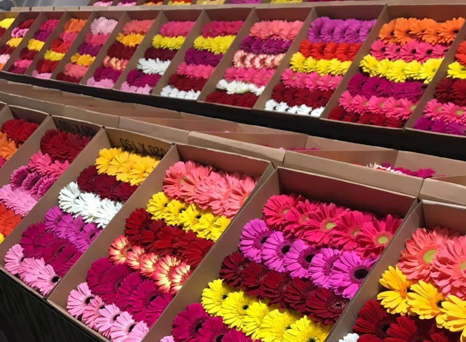 Цветы оптом с доставкой в питере, роз