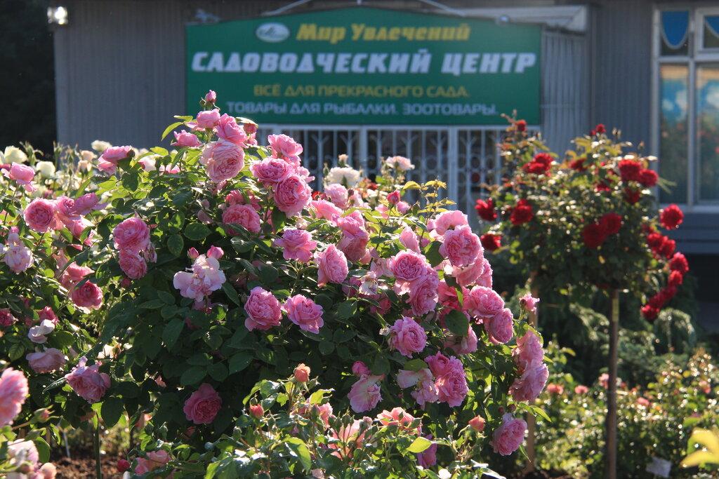 Рынок цветов, цветы в магазинах мир увлечений