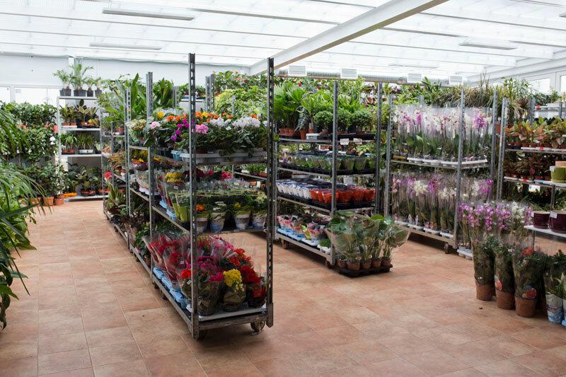 Обзор оптовый рынок цветов ростов черевичкина, пионы оптом