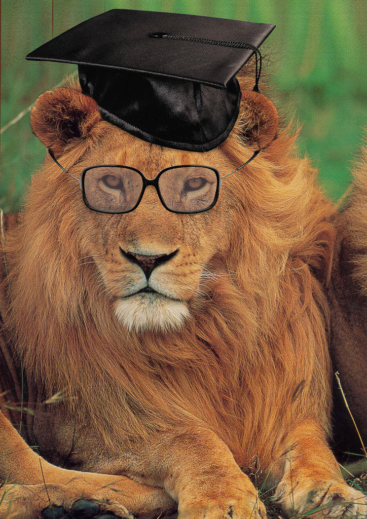 Дисплей, тигры и львы картинки