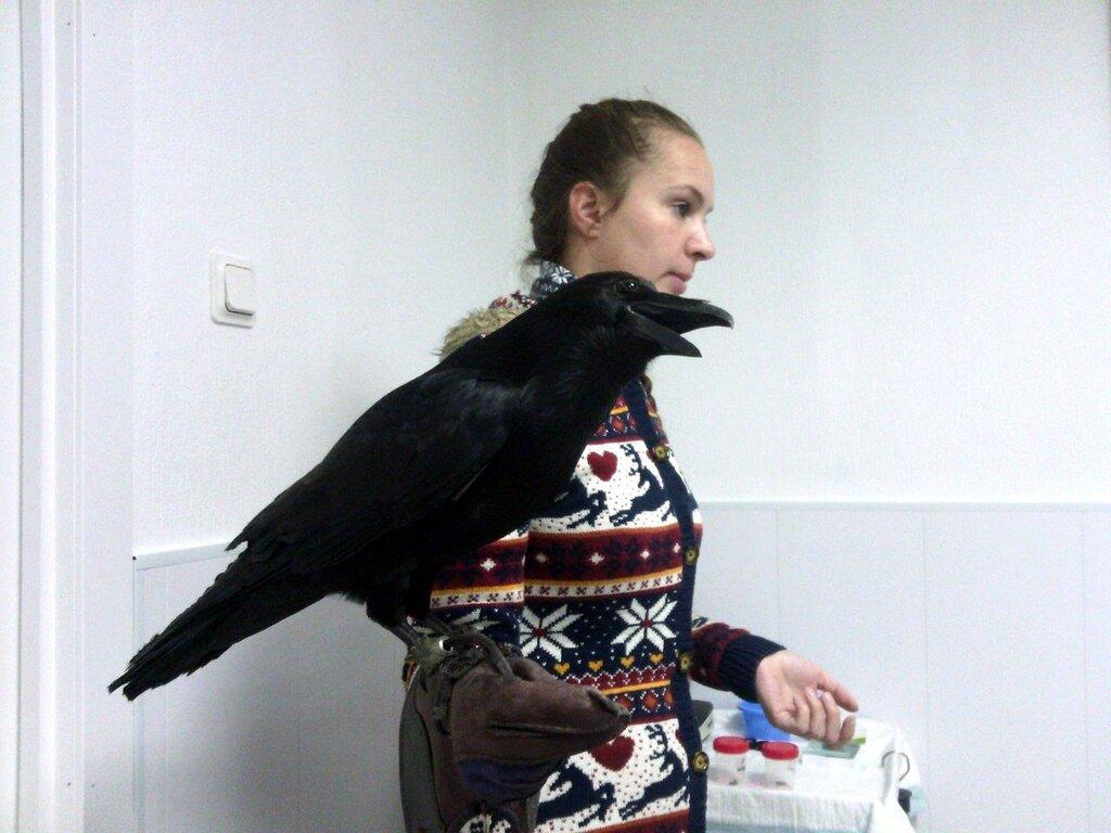 ветеринарная клиника — Клиника ветеринарной стоматологии и пластической хирургии доктора Гиль — Санкт-Петербург, фото №8