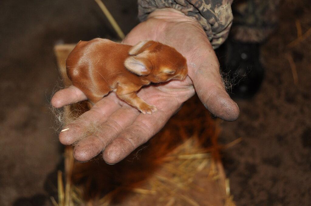 звероферма — Кролики Кролист — Кимовск, фото №8