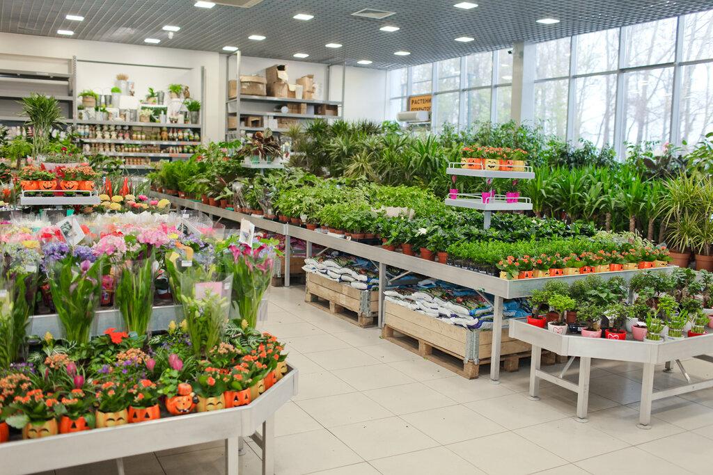 7flowers Ru Интернет Магазин Цветов