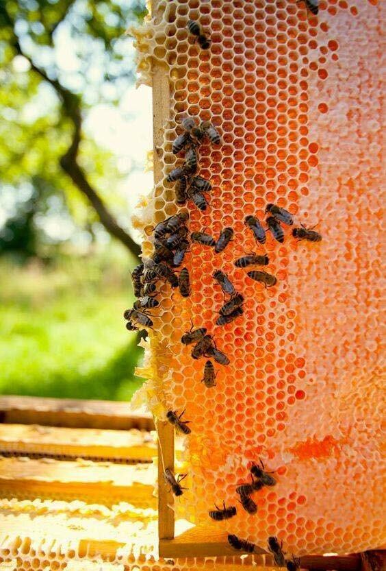как как пчелы в апреле носят мед фото год