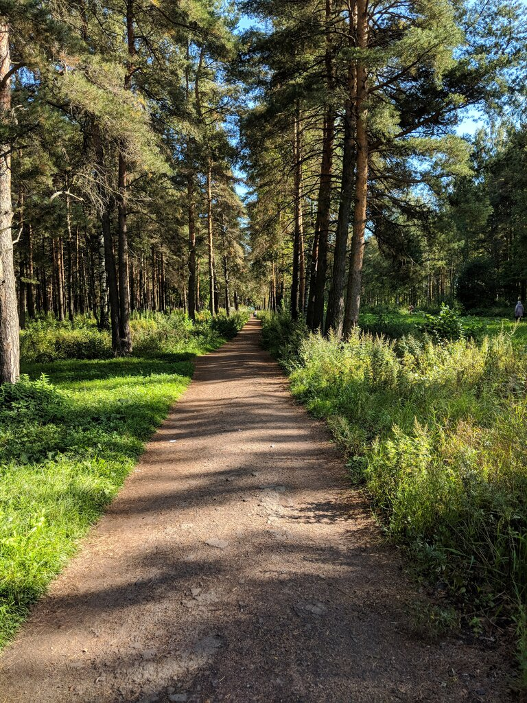 Фото лесопарков в спб и области