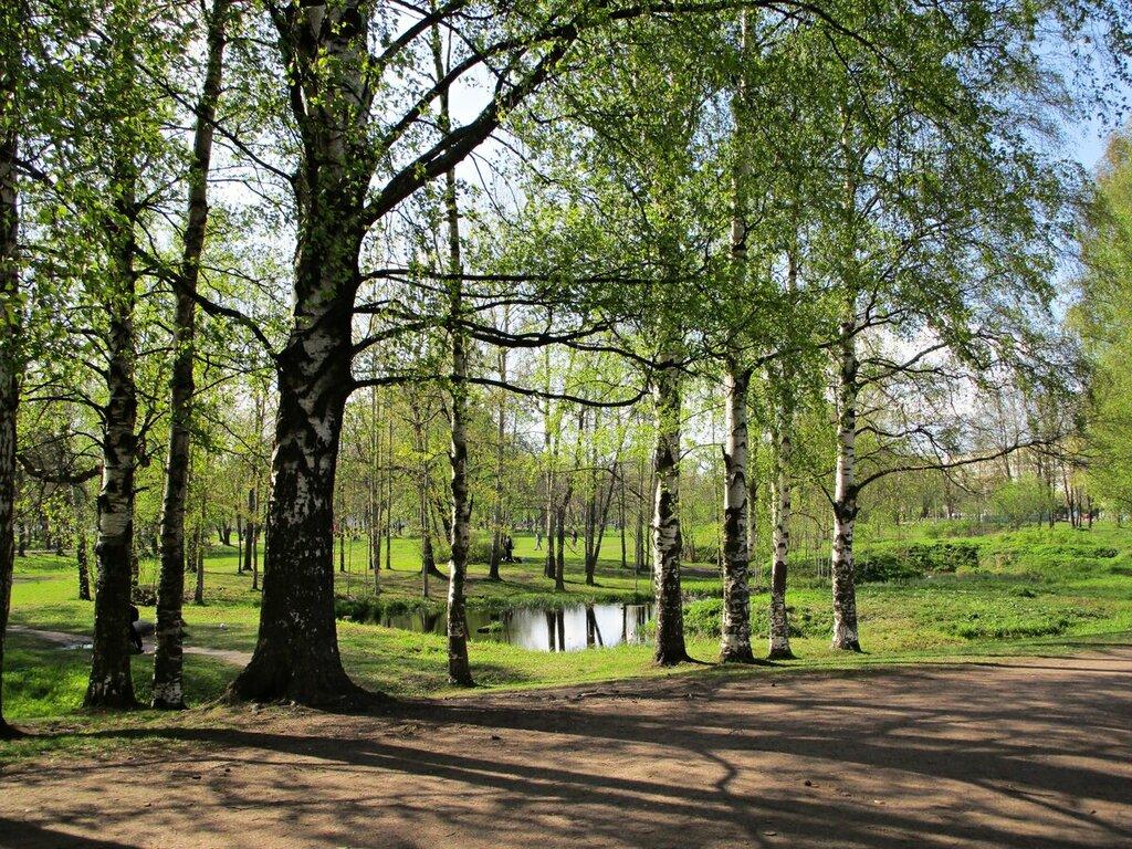 фото лесопарков в спб и области при выборе