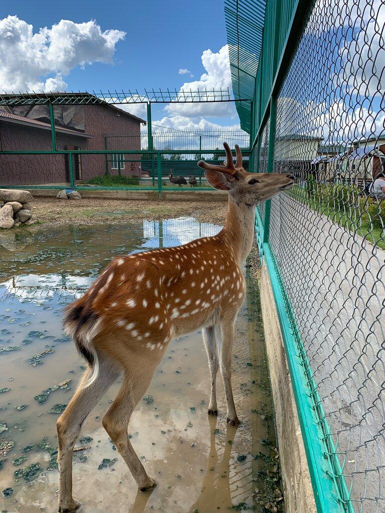 зоопарк — Экзотик парк — Москва, фото №2