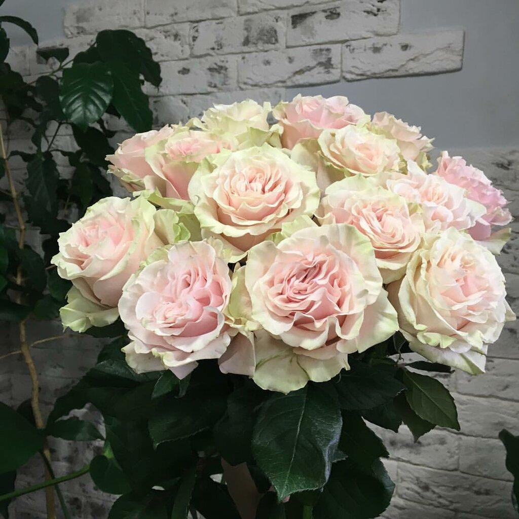 магазин цветов — Мир Цветов — Санкт-Петербург, фото №5