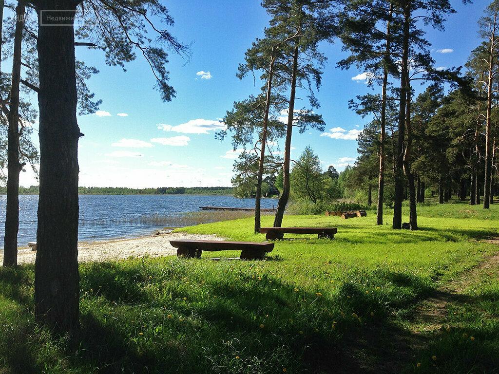 мышь, обитающая череменецкое озеро фото деревянный пол