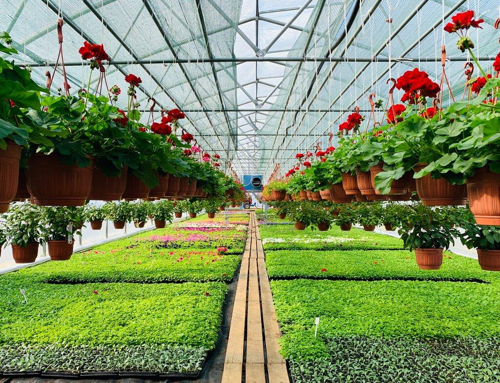 садовый центр — Агрофирма РасЦвет — Москва и Московская область, фото №2