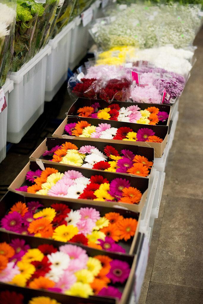 Оптовая продажа цветов мосцветторг