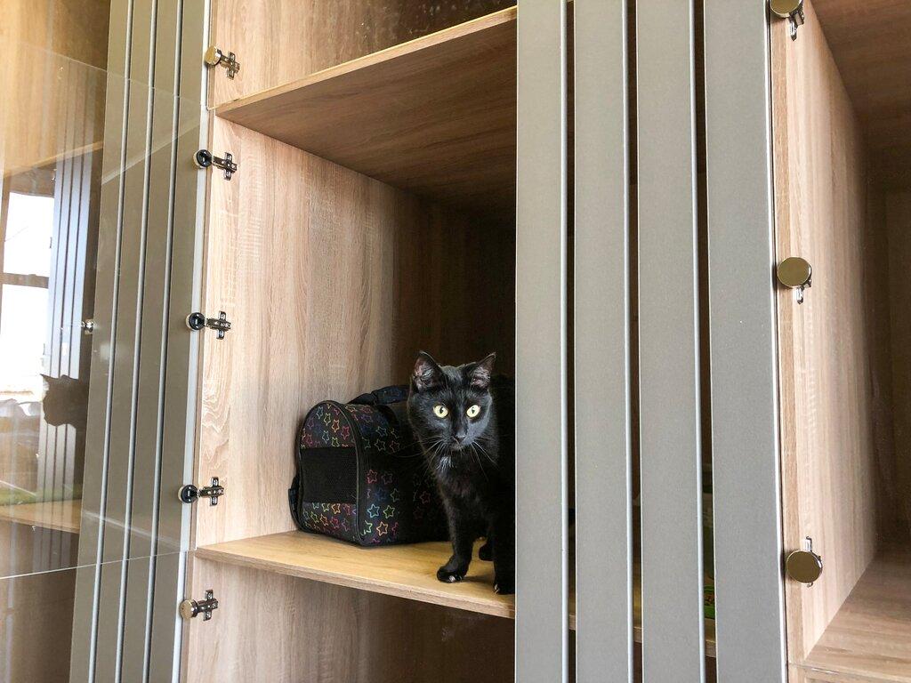 гостиница для животных — Cat Inn — Санкт-Петербург, фото №2