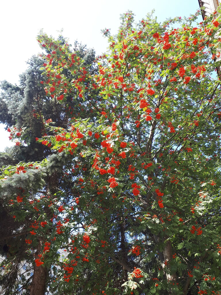 средства защиты растений — ОРТОН — Пушкино, фото №2