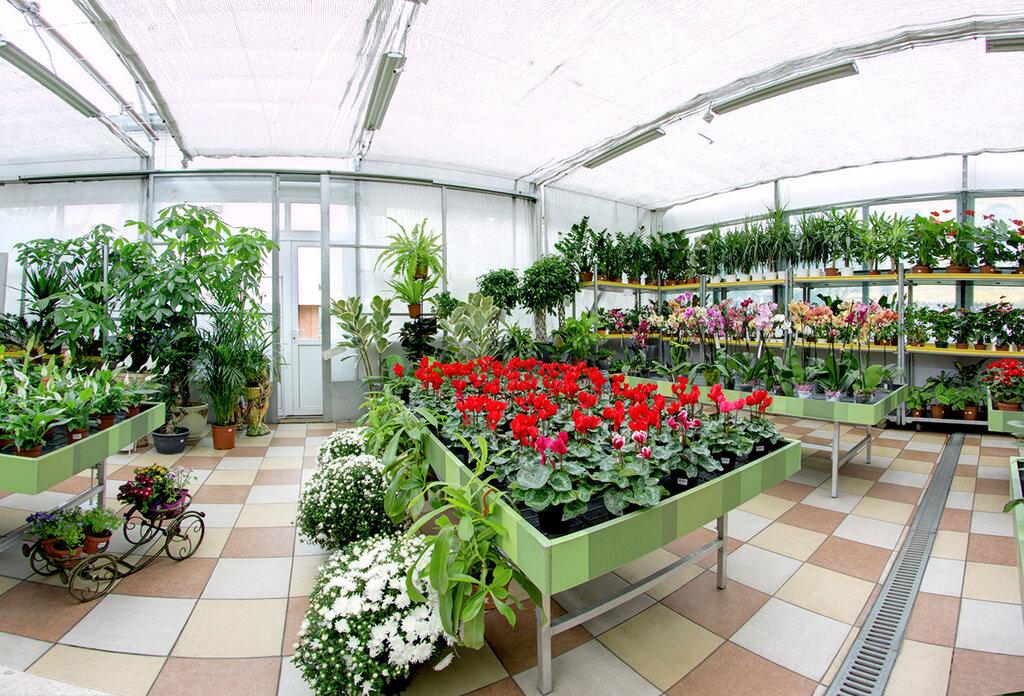 Теплицы цветов челябинске купить, растения купить киев