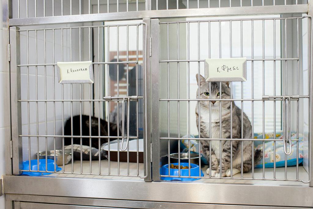 ветеринарная клиника — Биоконтроль — Москва, фото №7