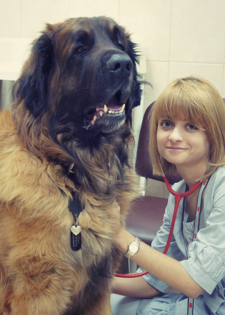ветеринарная клиника — Ветеринарные центры малотравматичной хирургии и комплексного восстановления Лебеди — Москва, фото №10