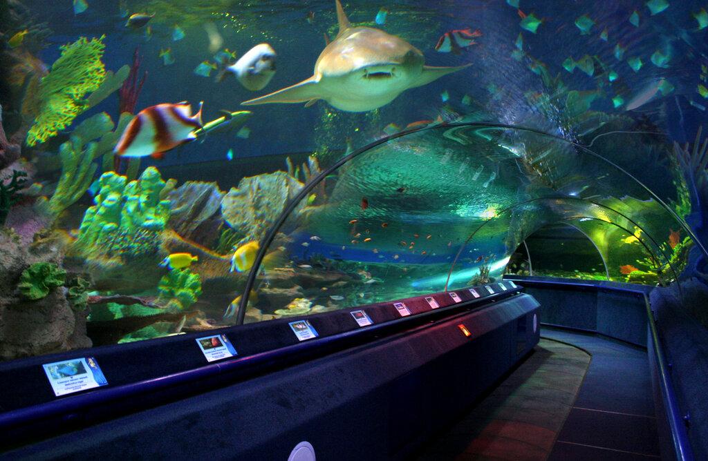 dolphinarium, aquarium — Санкт-Петербургский Океанариум — Saint Petersburg, photo 1
