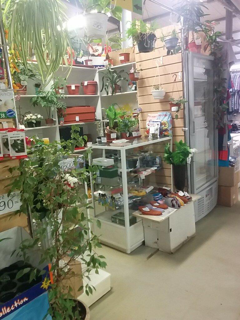 Магазины цветов в самаре, цветы сочетаются букете