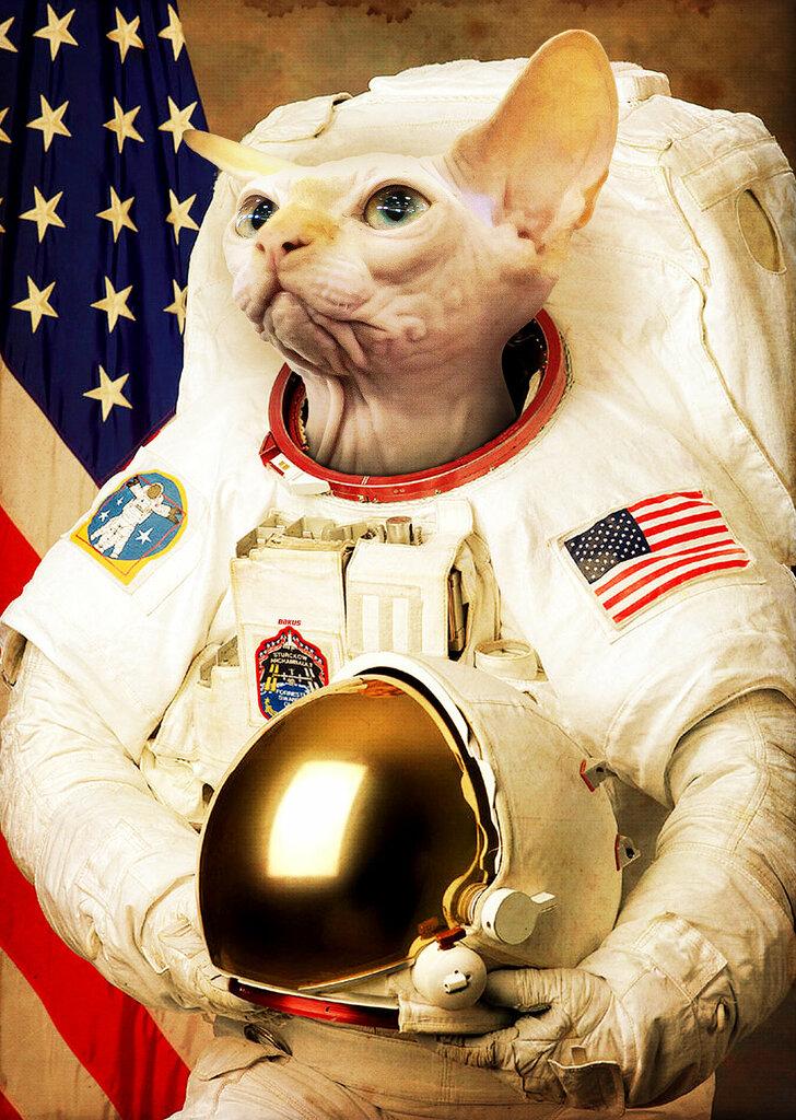 поможет фото приколы день космонавтики несколько