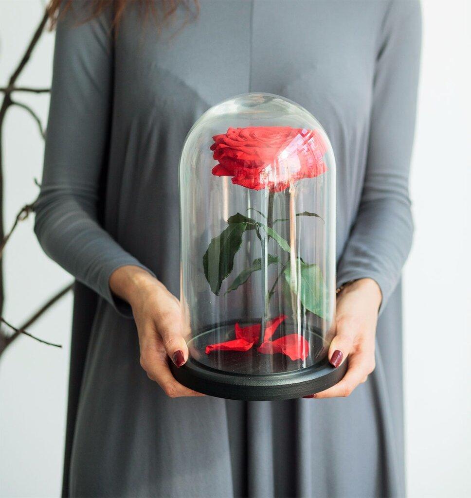 магазин цветов — Роза в колбе — Москва, фото №2