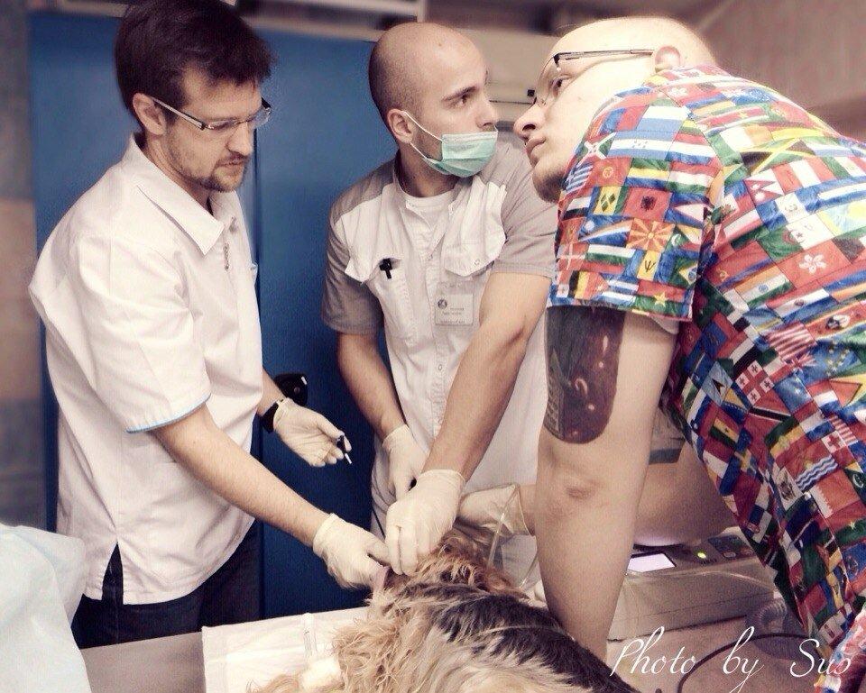 ветеринарная клиника — Ветеринарные центры малотравматичной хирургии и комплексного восстановления Лебеди — Москва, фото №8