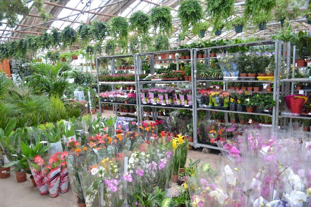 Оптовые цены на живые цветы в москве