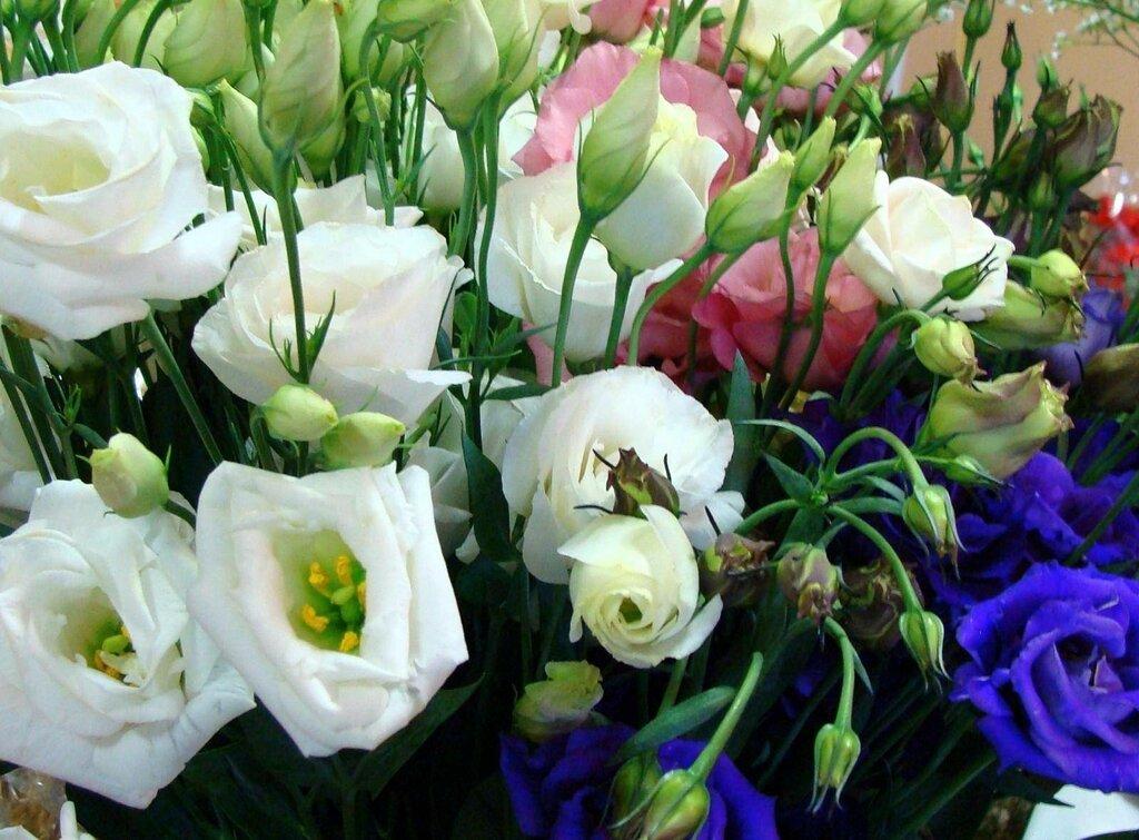 Цветы похожие на розы кустовые, каких цветов составлять