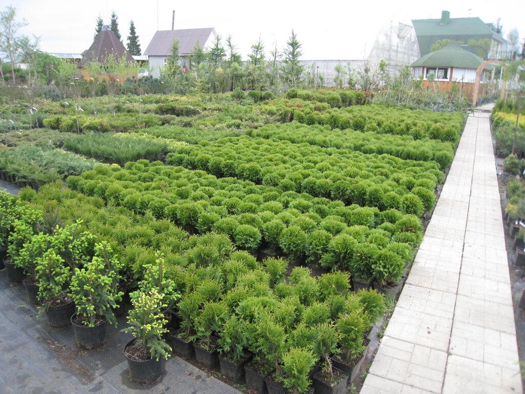 фото растений в питомнике татарникова суть заключается