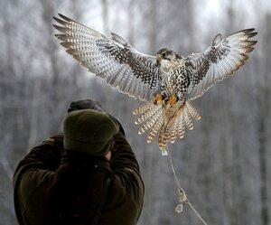 «Музей природы и соколиной охоты» фото 1