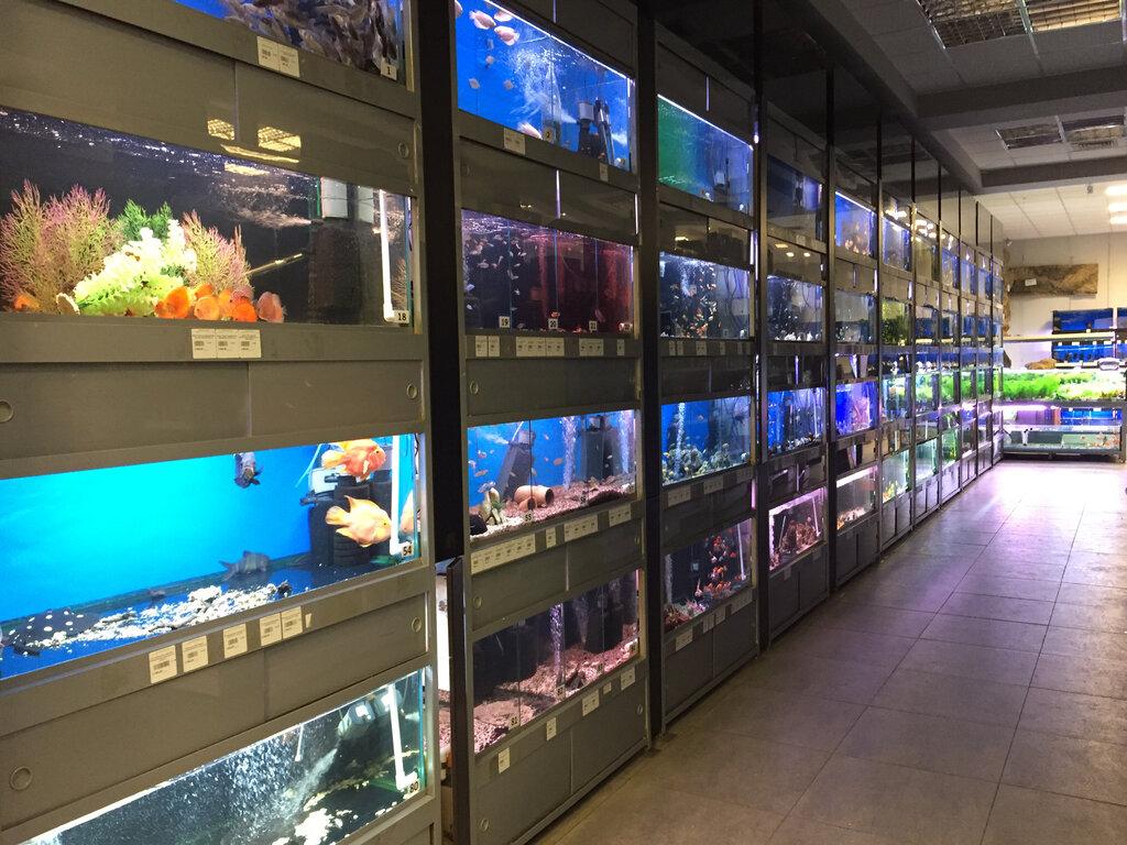 картинки аквариумного магазина итоге моих