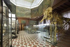 «Кружок юных натуралистов вЗоологическом музее МГУ» фото 1