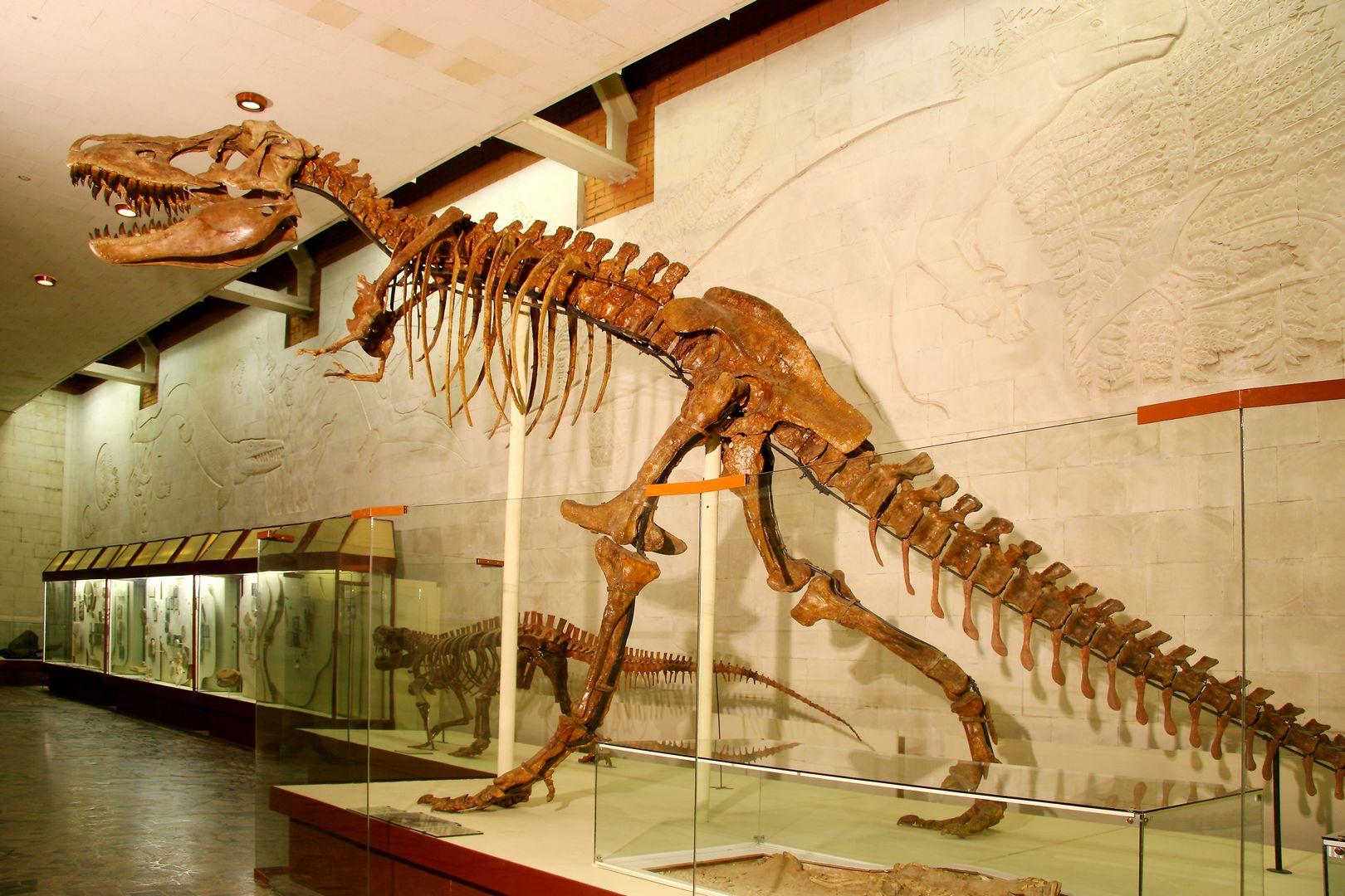 «Палеонтологический музей им. Ю.А. Орлова» фото 4