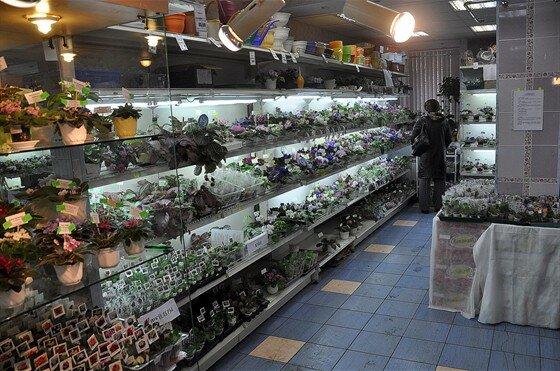 Невесты, интернет магазин цветов фиалок днепропетровск