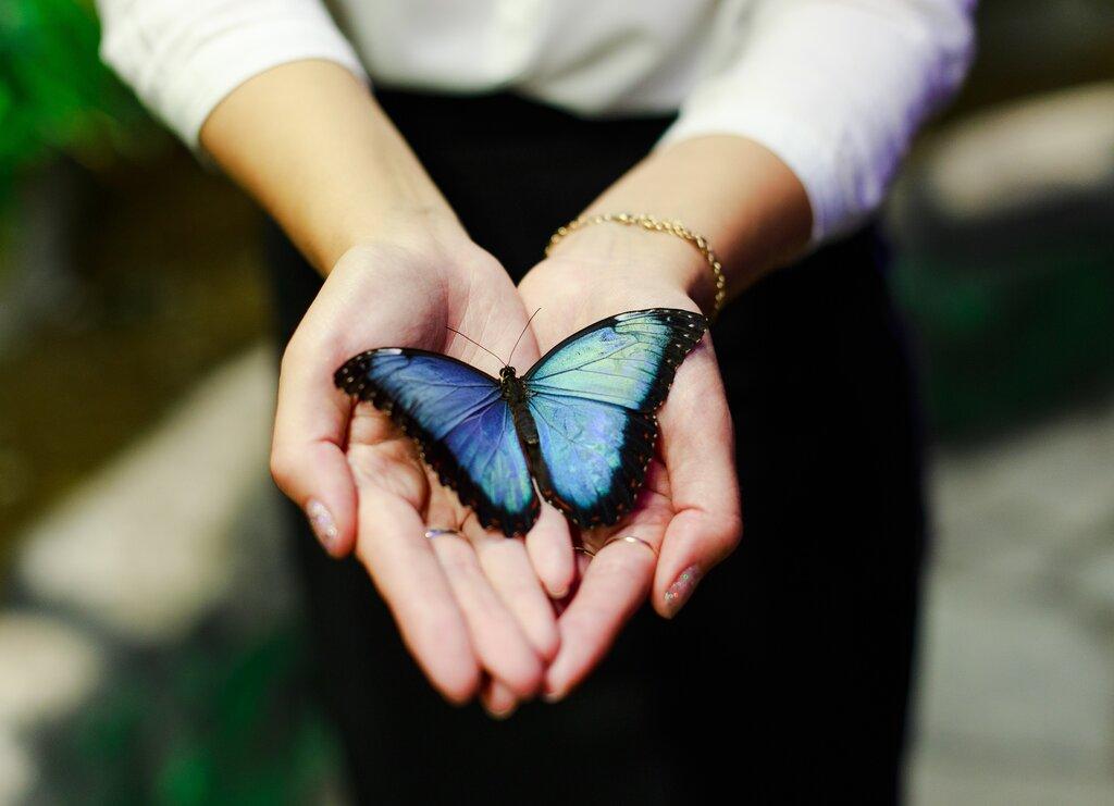 Картинки много бабочек в руках