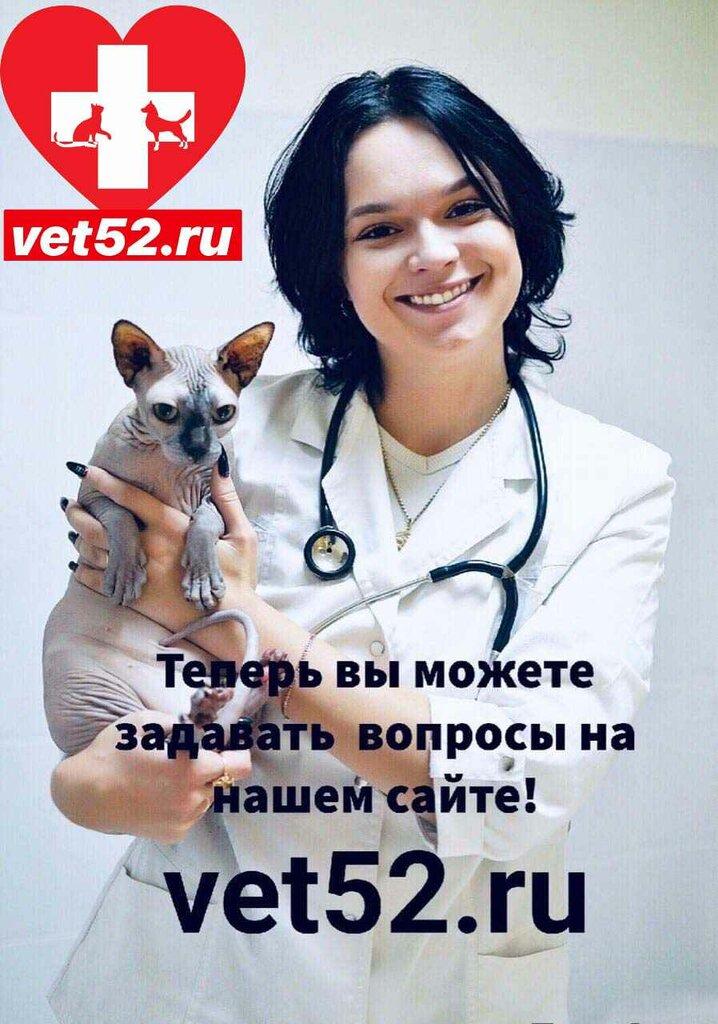 ветеринарная клиника — Ветеринар-НН — Нижний Новгород, фото №2
