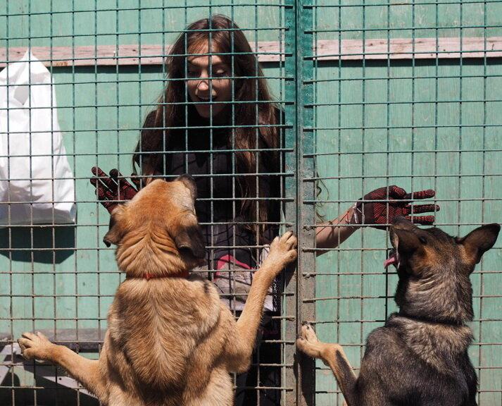 приют для животных — Кожуховский приют для бездомных животных — Москва, фото №1