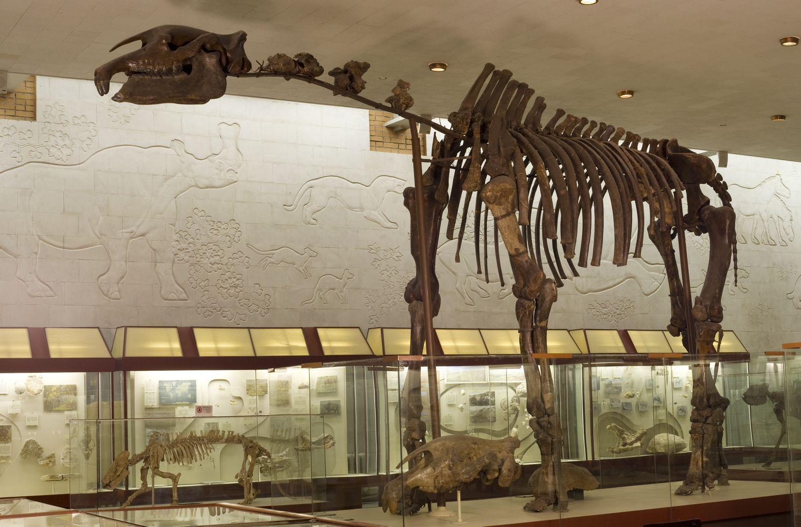«Палеонтологический музей им. Ю.А. Орлова» фото 3