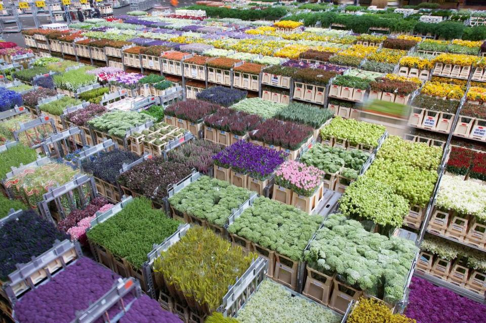 Невесты, цветы екатеринбург дешевые опт