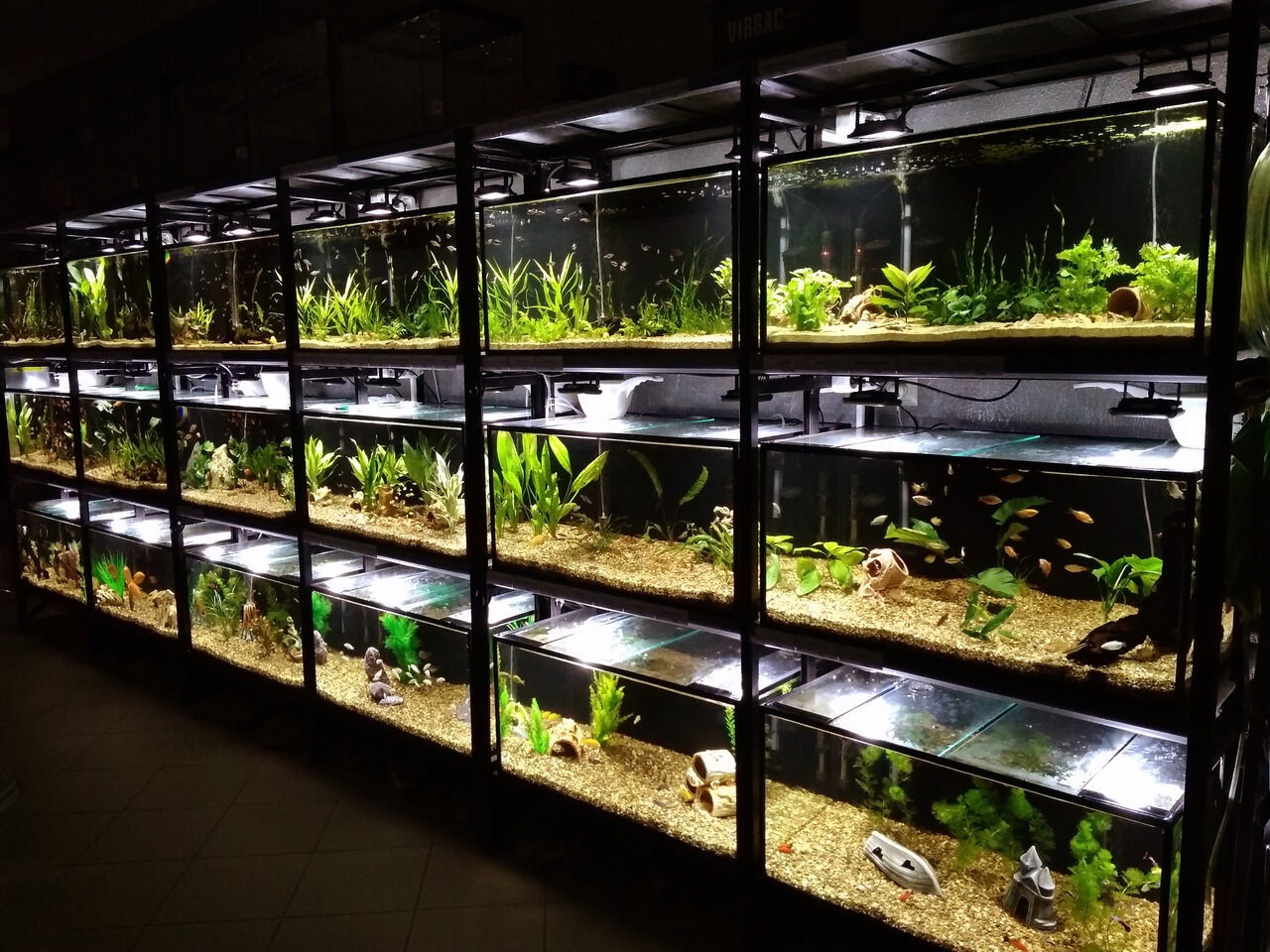 картинки аквариумного магазина листья всех, кто